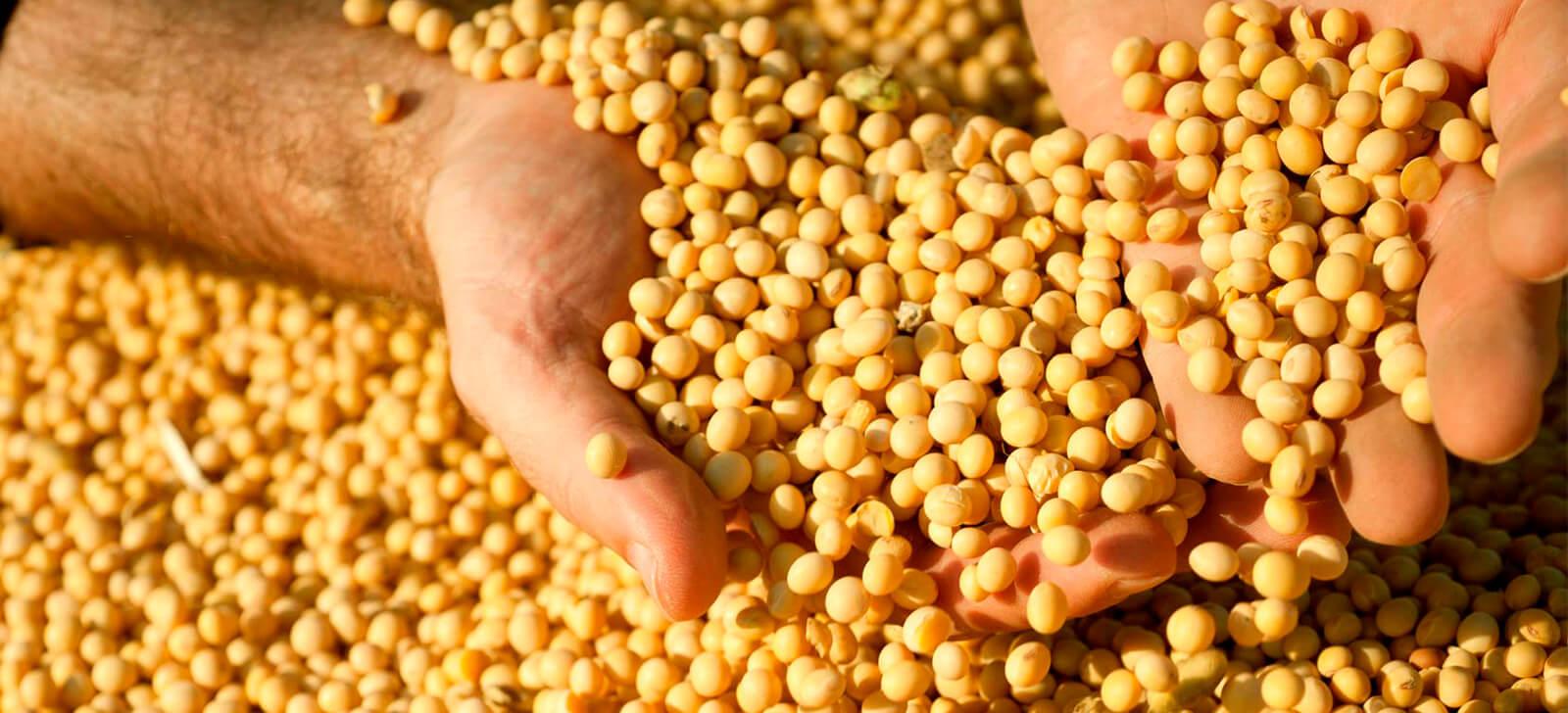 Encontro entre produtores de grãos discute controle biológico para o manejo de pragas