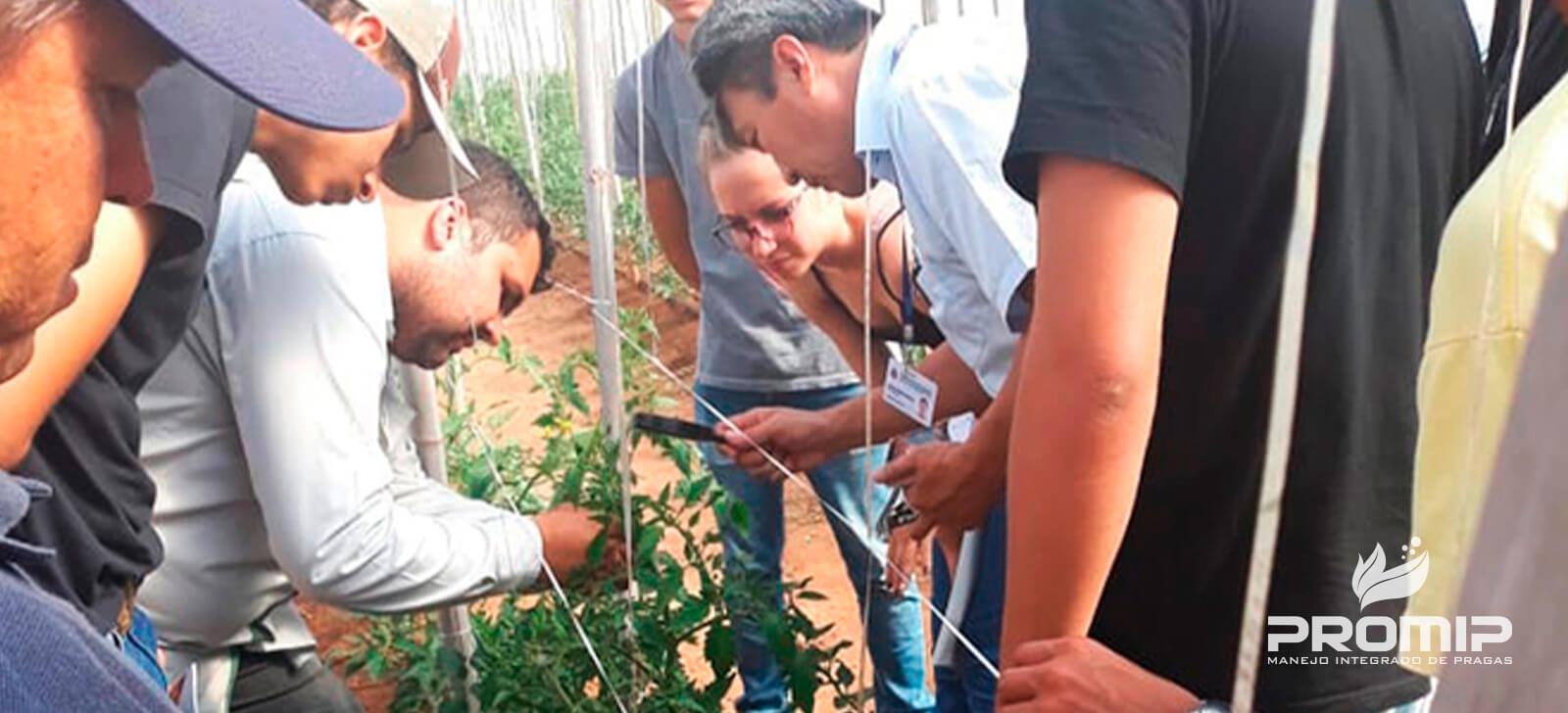 PROMIP realiza treinamentos em manejo integrado de pragas a produtores da região de Marília