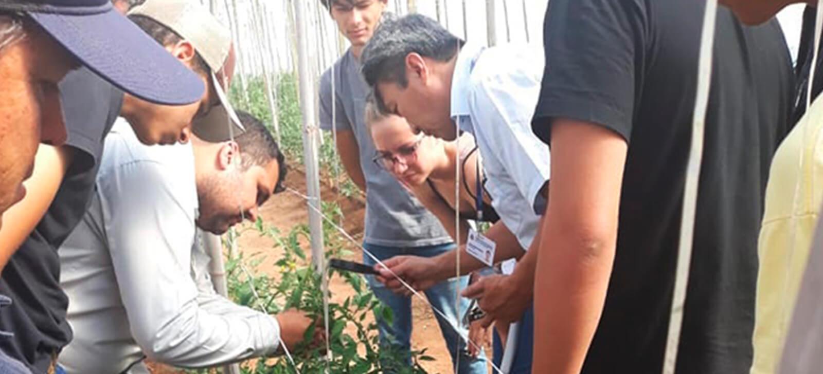promip manejo integrado depragas controle biologico promip realiza treinamentos manejo integrado de pragas a produtores da regiao marilia