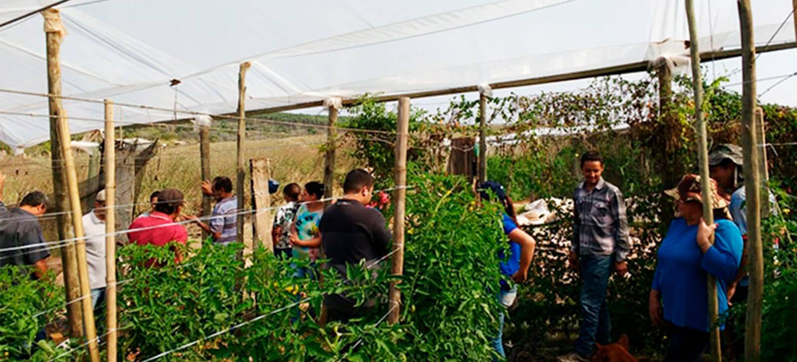 promip manejo integrado de pragas controle biologico promip realiza treinamentos manejo integrado de pragas a produtores da regiao marilia