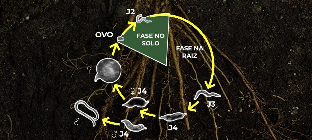 promip manejo integrado pragas controle biologico mip experience artigo nematoide ciclo