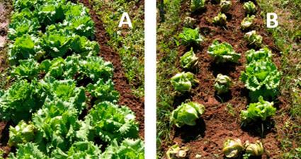 promip manejo integrado pragas controle biologico mip experience artigo nematoide danos mobile