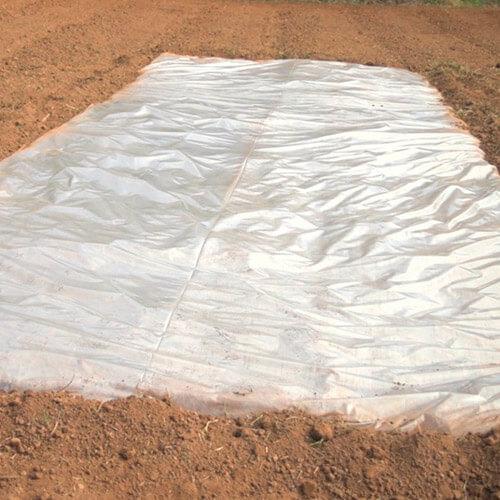 promip manejo integrado pragas controle biologico mip experience artigo nematoide praga solarização