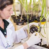 promip manejo integrado pragas controle biologico portal mip pesquisadores mobile 2