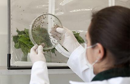 promip manejo integrado pragas controle biologico servico seletividade mobile