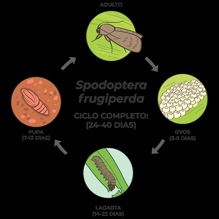 promip manejo integrado pragas controle biologico mip experience artigo Spodoptera frugiperda ciclo