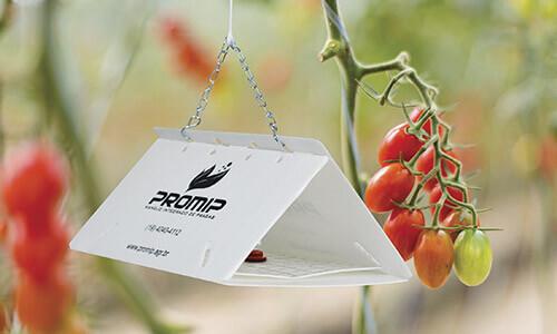 promip manejo integrado pragas controle biologico mip experience artigo lagartas desfoladoras brocadoras armadilha feromonio