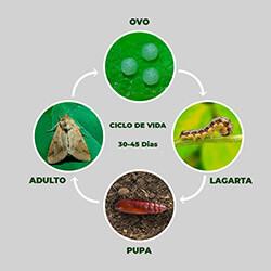 promip manejo integrado pragas controle biologico mip experience artigo lagartas desfoladoras brocadoras ciclo mobile
