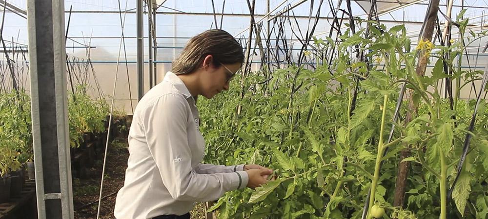promip manejo integrado pragas controle biologico mip experience artigo tripes controle cultural