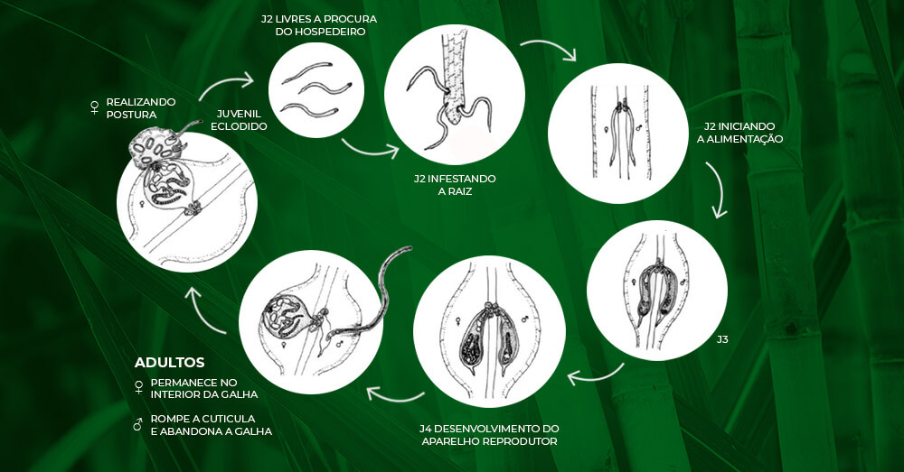 promip manejo integrado pragas controle biologico mip experience nematoides ciclo