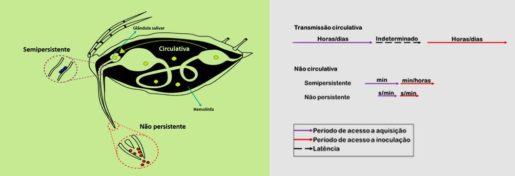 promip manejo integrado pragas controle biologico mip experience afídeos transmissao