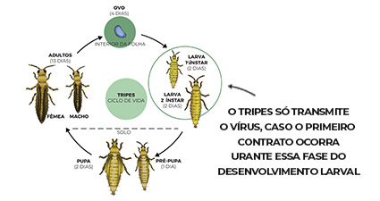 promip manejo integrado pragas controle biologico mip experience artigo vira cabeca ciclo mobile final