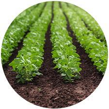 promip manejo integrado pragas controle biologico mip experience spodoptera frugiperda plantacao soja mobile