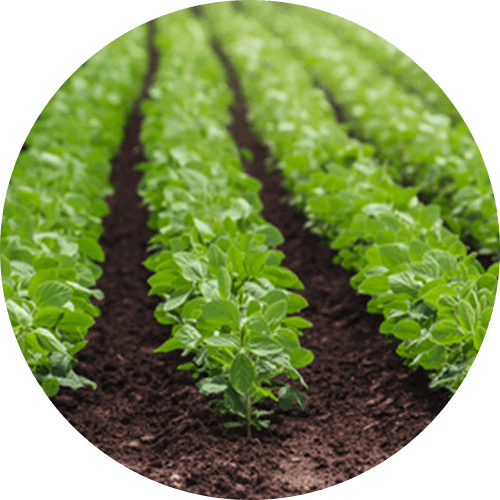 promip manejo integrado pragas controle biologico mip experience spodoptera frugiperda plantacao soja