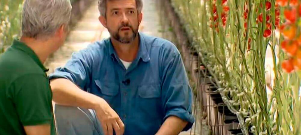 promip manejo integrado pragas controle biologico mip experience artigo contribuicao mip cultura tomate imagem interna
