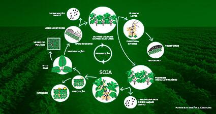 promip manejo integrado pragas controle biologico mip experience ferrugem asiatica soja ciclo mobile