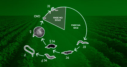 promip manejo integrado pragas controle biologico mip experience nematoides soja ciclo mobile
