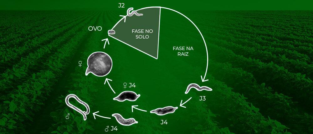 promip manejo integrado pragas controle biologico mip experience nematoides soja ciclo