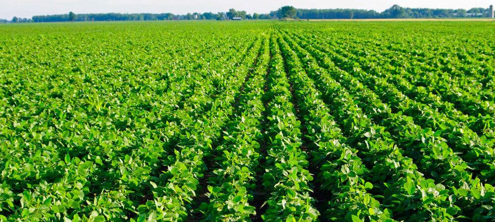 promip manejo integrado pragas controle biologico mip experience nematoides soja mlavoura soja
