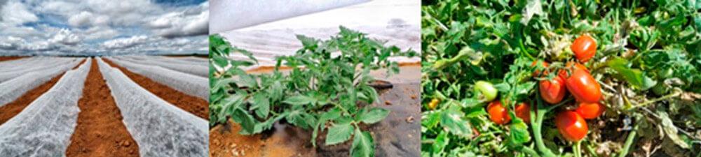promip manejo integrado de pragas controle biologico em batata aplicacao agrotextil_