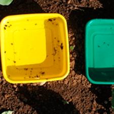 promip manejo integrado de pragas controle biologico em batata armadilhas amarelas 02 mobile