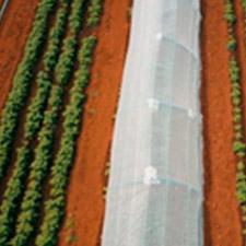 promip manejo integrado de pragas controle biologico em batata producao semente 03 mobile
