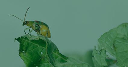 promip manejo integrado de pragas controle biologico pensando insetos fora caixa header mobile