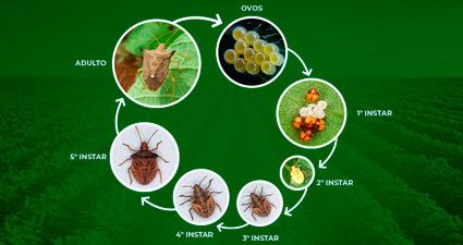 promip manejo integrado pragas controle biologico mip experience percevejo soja ciclo vida mobile