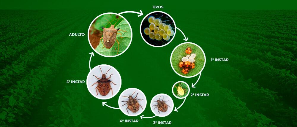 promip manejo integrado pragas controle biologico mip experience percevejo soja ciclo vida