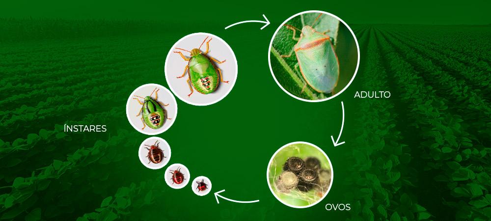 promip manejo integrado pragas controle biologico mip experience piezodorus guildinii ciclo 01