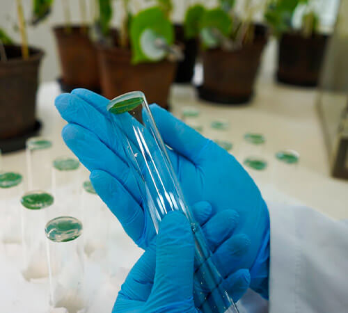 promip manejo integrado pragas controle biologico mip experience resistência mosca branca estudos resistencia (1)