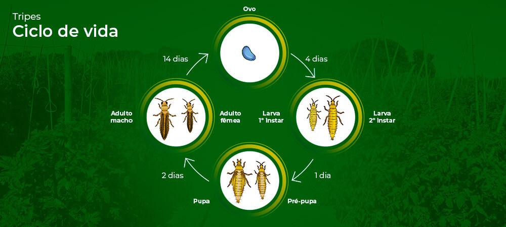 promip manejo integrado pragas controle biologico mip experience manejo integrado tripes ciclo final