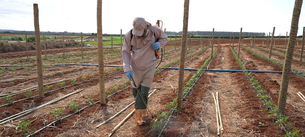 promip manejo integrado pragas controle biologico mip experience monitoramento pragas doenças tomate controle quiico