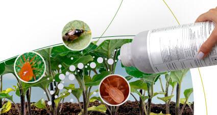 promip manejo integrado pragas controle biologico mip experience monitoramento pragas entendendo bioprodutos parte 1 header mobile
