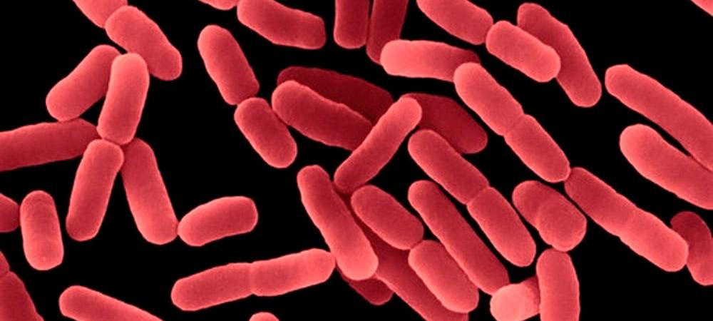 promip manejo integrado pragas controle biologico mip experience monitoramento pragas entendendo bioprodutos parte 2 bacterias 02