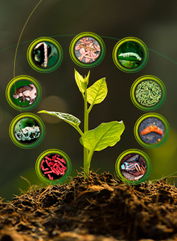 promip manejo integrado pragas controle biologico mip experience monitoramento pragas entendendo bioprodutos parte 2 capa