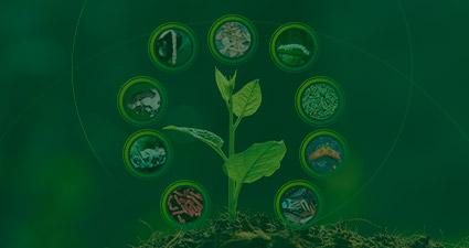 promip manejo integrado pragas controle biologico mip experience monitoramento pragas entendendo bioprodutos parte 2 header mobile